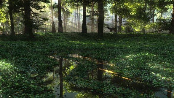 Обои Охотник в плаще с капюшоном и ружьем спрятался за большим деревом и наблюдает за оленем, стоящим на лесной поляне заболоченного леса