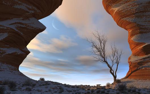 Обои 3d природа, красивый каньон с одиноким деревом, возле которого бродит одинокий волк