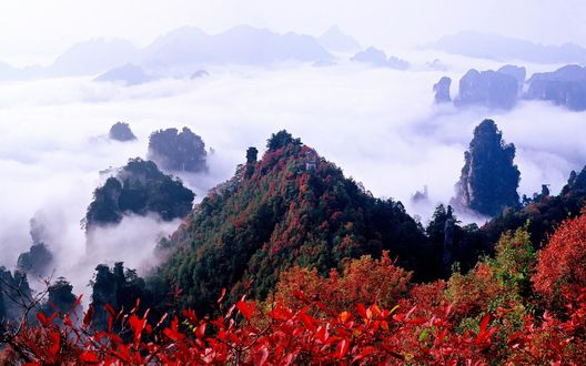 Обои Национальный лесной парк, Китай / China