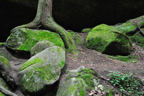 Обои Пещера Old Man's Cave, Hocking Hills State Park, Ohio / Огайо