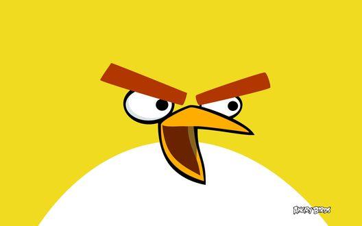 Обои Желтая птица из игры Angry Birds / Злые птицы