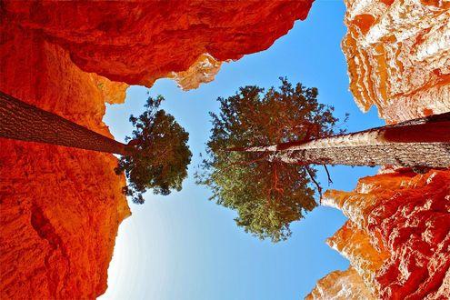 Обои Bryce Canyon, National Park, USA / Брайс-Каньоон, национальный парк, США