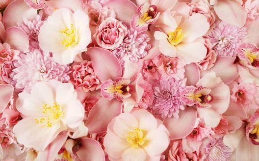 Цветы розовые обои