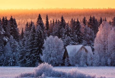 Обои Закат в снежном лесу, среди деревьев стоит небольшой домик