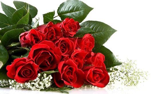 Обои Букет алых роз
