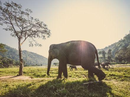 Обои Стадо слонов прогуливается по поляне
