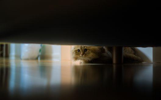 Обои Кот заглядывает под диван