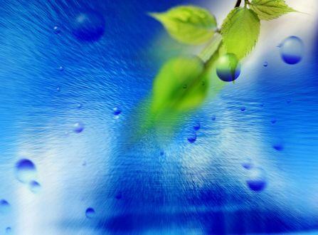 Обои Листочки на голубом фоне с каплями воды