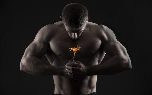 Обои Мускулистый мужчина держит цветок лилии в руках
