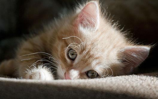 Обои Полосатый бело-рыжий котенок лежит на покрывале