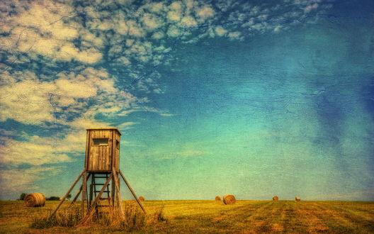 Обои Поле на фоне голубого неба и белых облаков