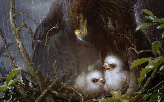 Обои Орел закрывает своими могучими крыльями гнездо с птенцами от дождя