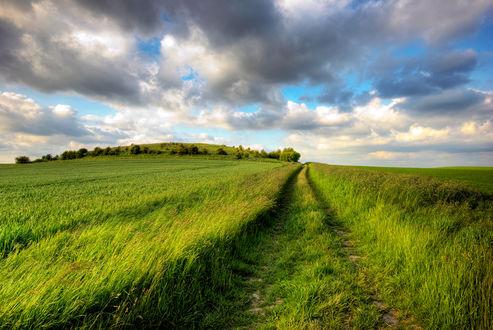 Обои Дорога в поле от проехавшего авто
