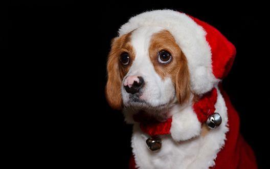 Картинки по запросу животные в праздничном костюмчике