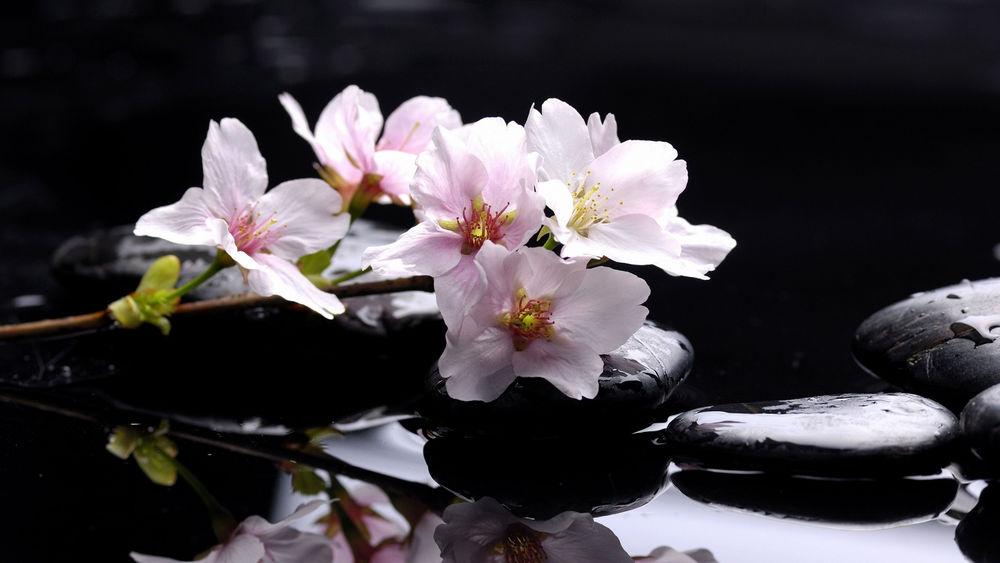 Цветы и камни фото, клипарт, лучшее, цветы - Цветы