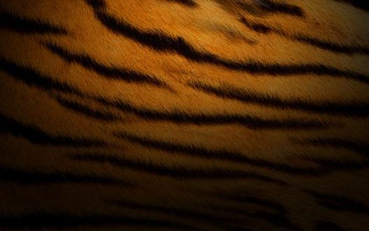 Обои Шкура тигра