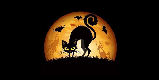 Обои Хэллоуин / Haloween - черная кошка на фоне луны, где летают летучие мыши и приведения
