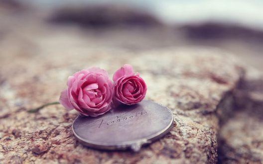 Обои Два розовый лютика лежат  на камне на круглом изделии с надписью