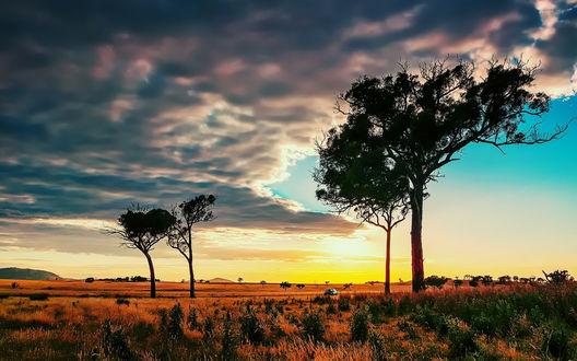 Обои Закат солнца, на небе скопления облаков, в дали видно проезжающий автомобиль на фоне четырех деревьев