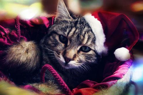 Обои Кот в красной новогодней шапке лежит в корнизе