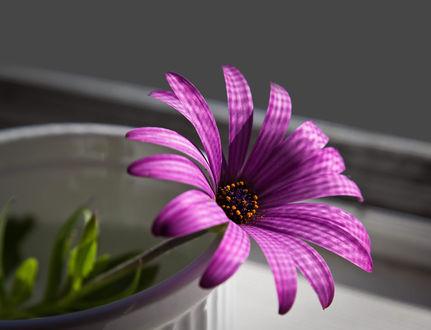 Обои Фиолетовый цветок в вазе