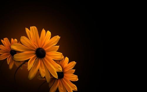 картинки цветов на черном фоне: