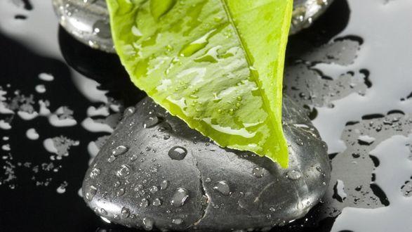 Обои Зеленый лист на мокрых черных камнях