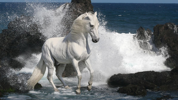 Обои Белая лошадь на фоне волны, бьющейся о камни