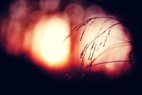 Обои Трава в свете заходящего солнца