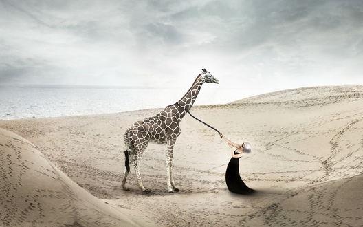 Обои Девушка в черном платье держит на поводке жирафа на фоне моря