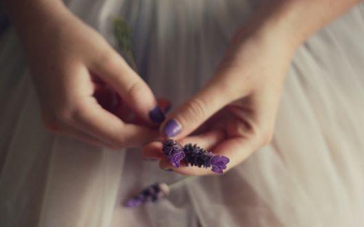 Обои Девушка держит ветку фиолетовой лаванды