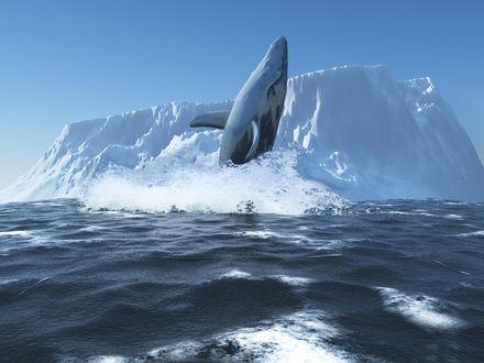 Обои Северный синий кит резвится в океанских просторах на фоне айсберга
