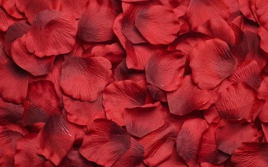 Обои Искуственные лепестки красных роз
