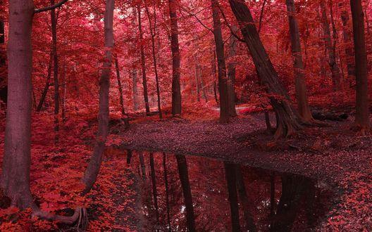 Обои Река течет через бордовый лес