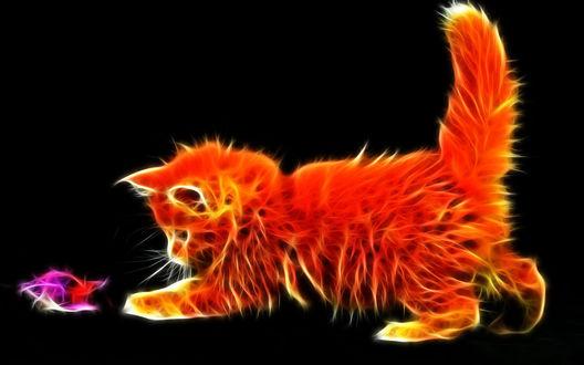 Обои Огненный пушистый рыжий котенок забавляется с игрушкой на черном фоне