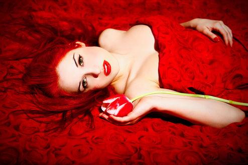 Обои Девушка с рыжими волосами и красным тюльпаном в руке