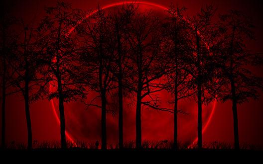 Обои Полная красная луна за черными деревьями