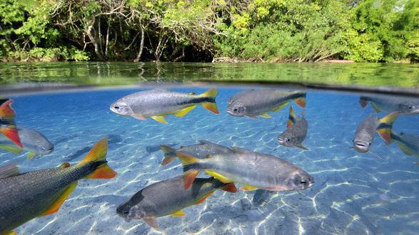 Обои Рыбы с цветными плавниками и хвостами плавают в чистой воде