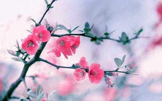 Обои Розовый куст на фоне неба