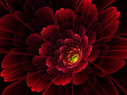 Обои Красный цветок