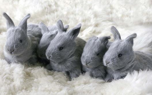 Обои Пять серых кроликов на белом ковре
