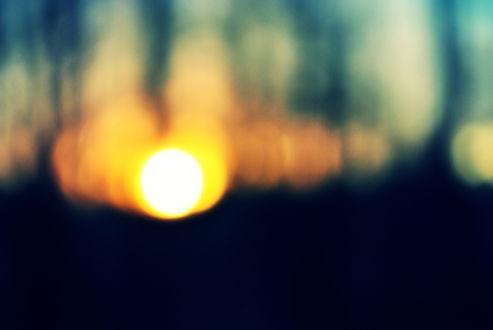 Обои Заходящее солнце среди деревьев