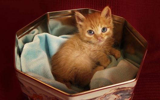Обои Маленький рыжий котенок лежит в коробке