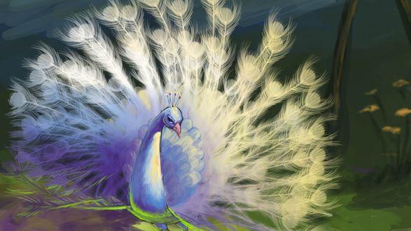 Обои Белый павлин с пышным хвостом наклонил голову