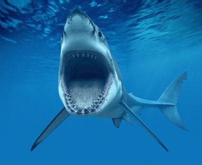 Обои Акула с открытой пастью