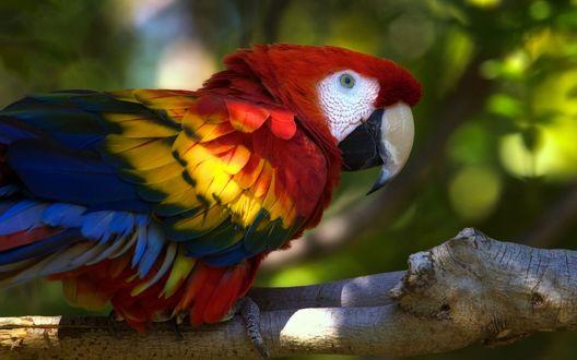 Обои Разноцветный попугай сидит на ветке дерева