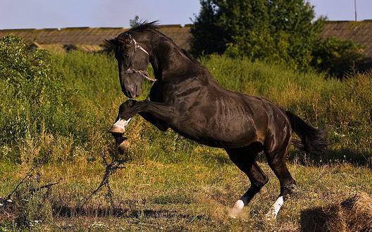 Обои Черная лошадь на фоне природы