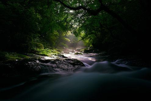 Обои Ручей протекает сквозь густой лес