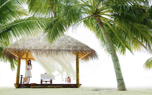 Обои Беседка на пляже под пальмой