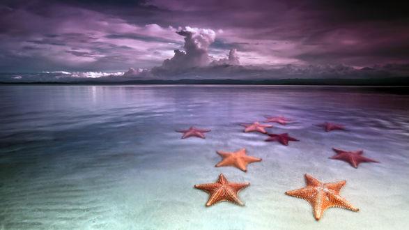 Обои Морские звезды на мелководье